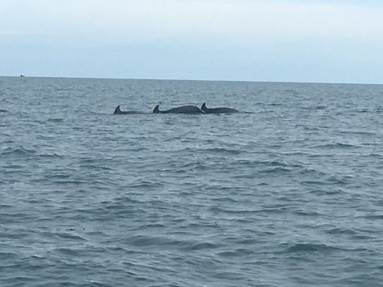 Grouville, UK: Afternoon speed boat ride, with lots of dolphins.