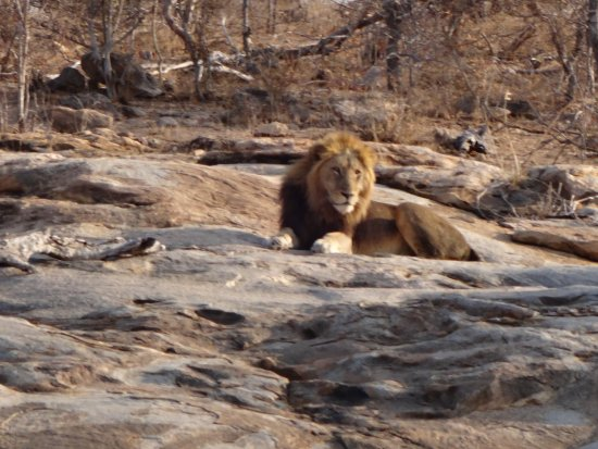 Jock Safari Lodge: drive