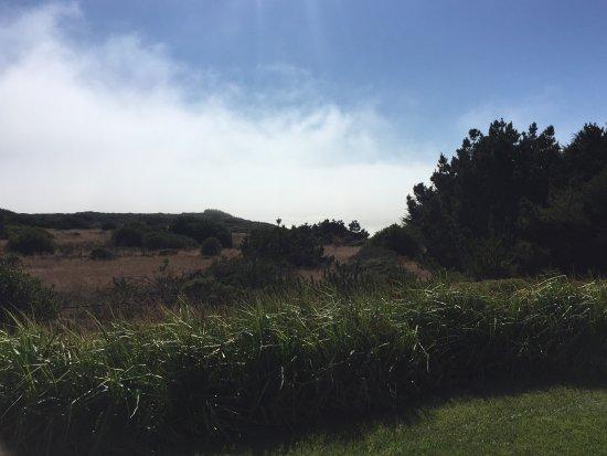 Jenner, Καλιφόρνια: Taken off the back porch, morning fog is blocking the ocean.