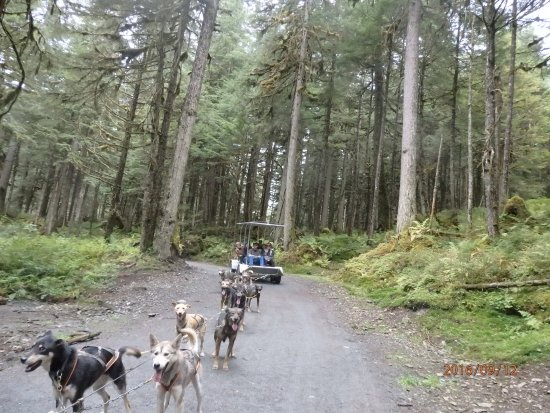 Dog Sled Discovery & Musher's Camp: Cart with up to 20 people are easily pulled through the woods and Dogs love the workout!