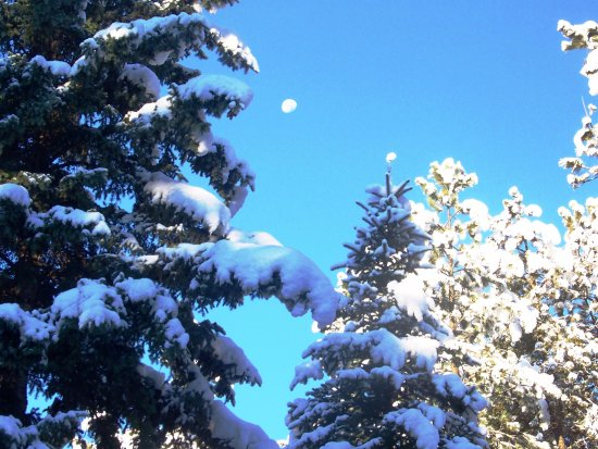 Elk Ridge Bed & Breakfast: Glorious spruces that line the property...catching a waning glimpse of the moon.
