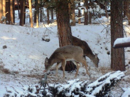 Elk Ridge Bed & Breakfast: Some guests prefer to eat outside.