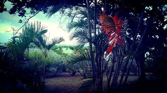 Hotel La Plantation: magnifique vue de la chambre