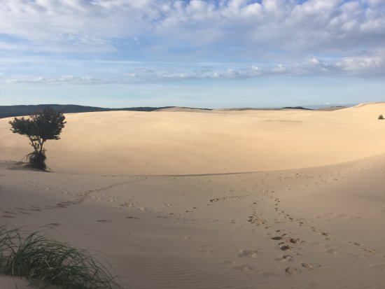 Hart, MI: from the top of the dunes