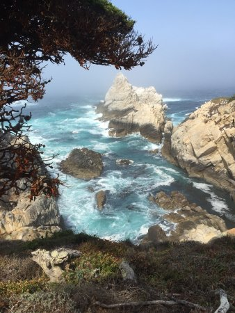 Point Lobos State Reserve: photo1.jpg