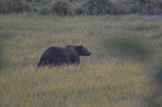 Kodiak, AK: Mother bear