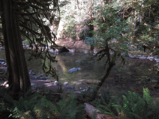 Welches, OR: Old Salmon River Trail