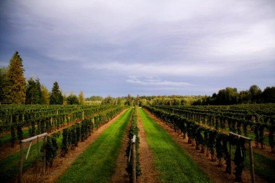 Courtenay, Canadá: Coastal Black Vineyard