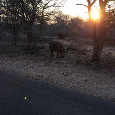 Kruger National Park: photo0.jpg
