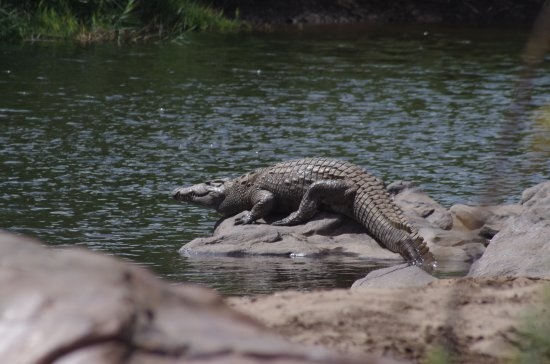 Nkhotakota, Malawi: Wildlife 500m away from the lodge