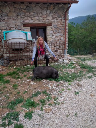 Montefalco, Italia: Martina the mal-adjusted guard pig