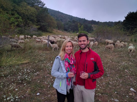 Wild Foods Italy: Sheep wrangling... with wine