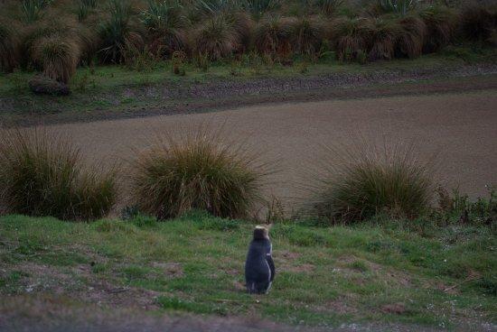 Penguin Place: pingouin en attente