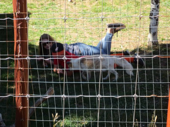 Divide, Kolorado: Special hands on experience with some of the animals cost extra $$