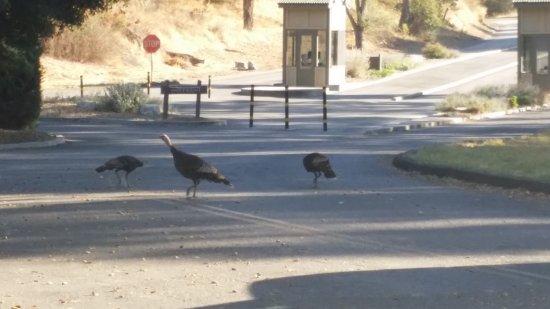 Arroyo Grande, CA: Entrance to park