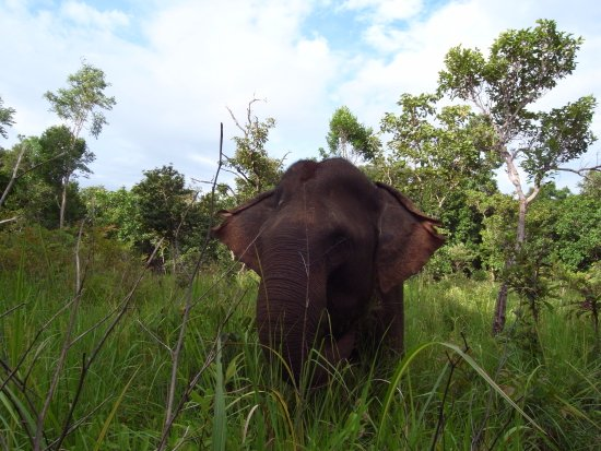 Sen Monorom, กัมพูชา: elephants