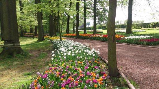 Groot-Bijgaarden, België: Tulip beds