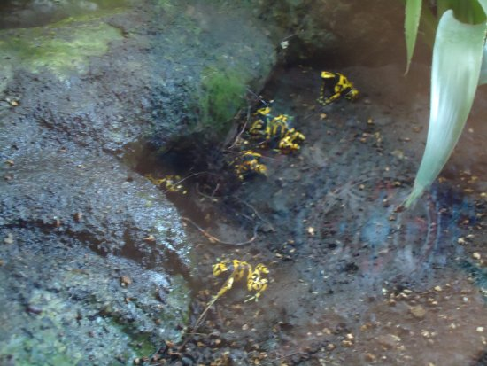 Calvia, Spania: rãs venenosas
