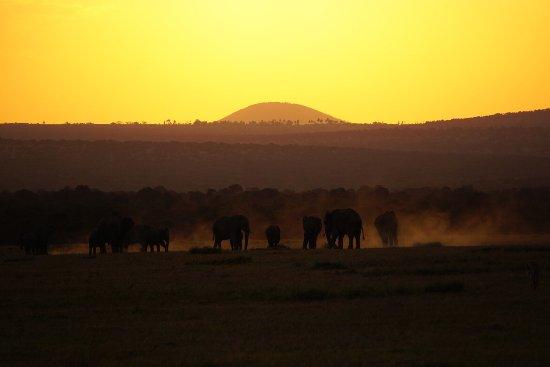 Ol Pejeta Bush Camp, Asilia Africa: photo0.jpg