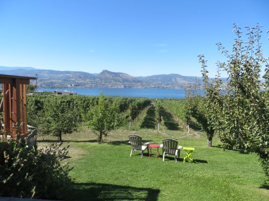 Naramata, Canada: The view from the grass area