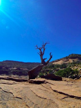 Grand Mesa: A lone tree...