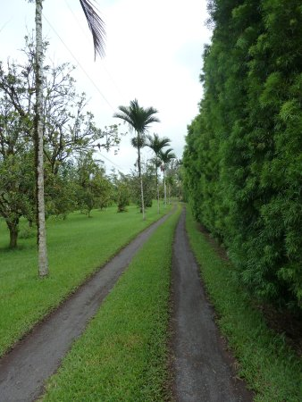 Lava Tree Tropic Inn: Driveway leading to the house beyond and on the right