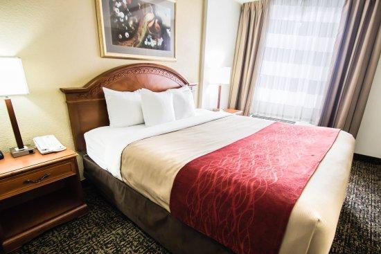 Quality Inn & Suites Winter Park Village Area: Guest Room