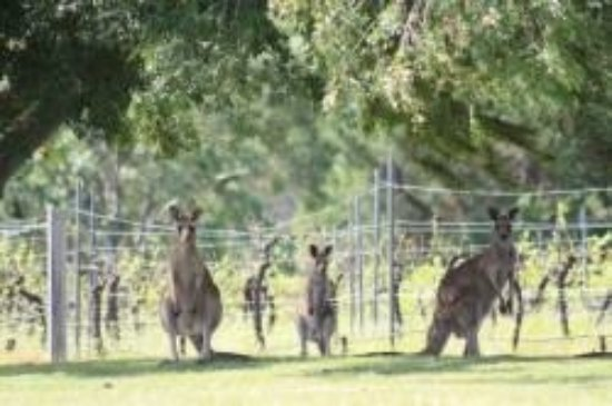Rothbury, Australia: Kanga Resort