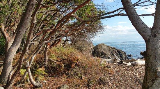 Friday Harbor, WA: Beautiful madrone trees along the way