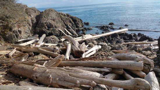 Friday Harbor, WA: lots of driftwood