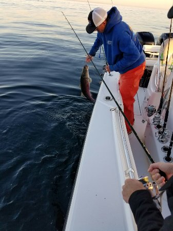 Truro, MA: Our Reel Deal experience!!! Captain Ian Wall is by far the best we've ever had...and we've been