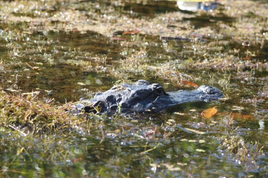 Everglades Area Tours: photo0.jpg