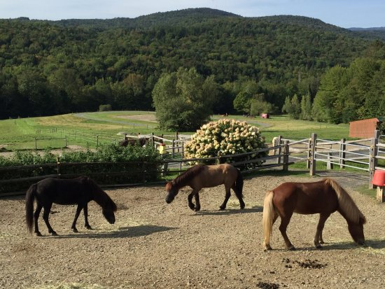 Vermont Icelandic Horse Farm: Beautiful Setting