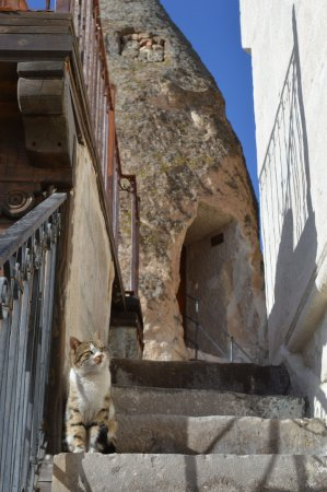 Divan Cave House: One of Turkey's many wild cats