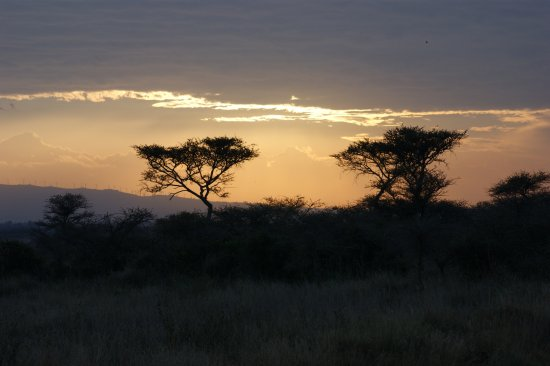 Nairobi Tented Camp: Beautiful sunset on our way back to camp
