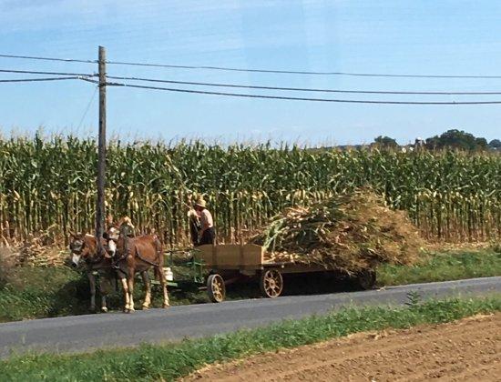 Strasburg, Pennsylvanie : Bustour durch Amish-Farmen