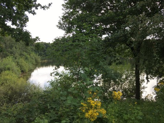 Sandbach, UK: Brereton Heath Local Nature Reserve