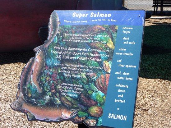 Gold River, Californien: Super Salmon
