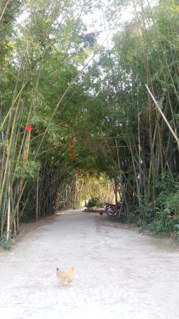 Fangchenggang, Китай: Bamboo aisle from the parking area to the lake