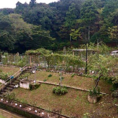 Jingu Rose Garden