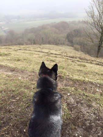 Hassocks, UK: On the hill at Wostenbury