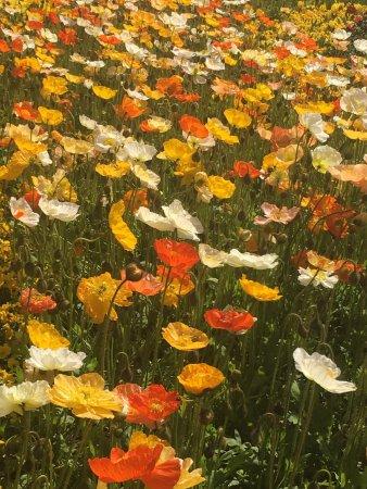 Floriade: photo7.jpg