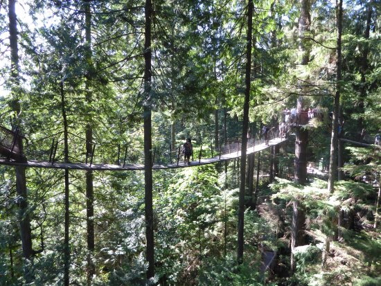 Kuzey Vancouver, Kanada: Cross the main bridge for a tree top walk...equally as crazy high