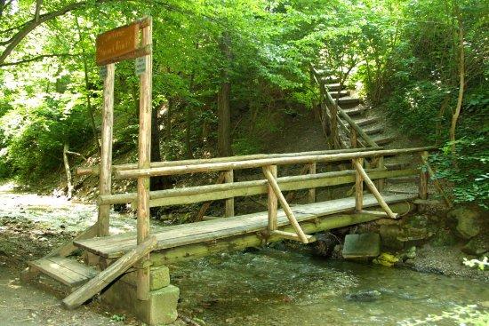 Klosterneuburg, Österrike: Weg vom Wald zu uns