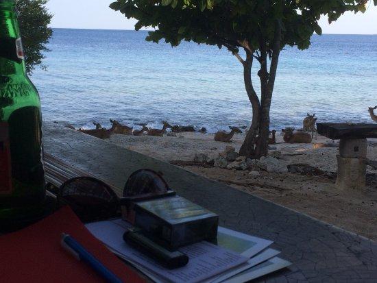 West Bali National Park, Indonesien: A l'heure de l'apéro avec les biches de mer