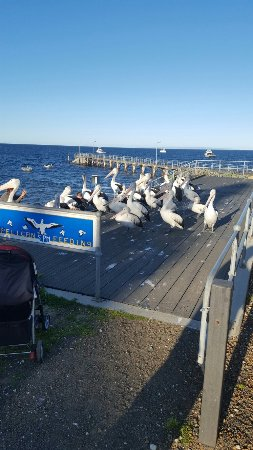 Kingscote, Australia: Fun afternoon outing. Was surprised by how many birds were there.