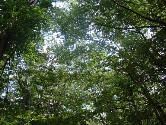 Gospic, Croacia: Dense forest