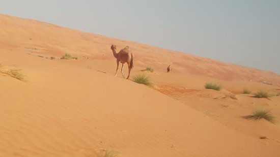 Wahiba Sands : On our way
