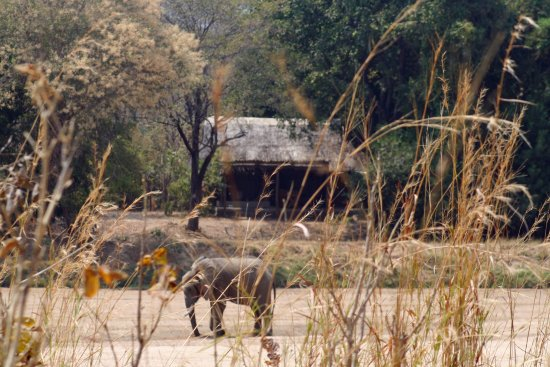 South Luangwa National Park, Zambia: View of lodge from other side of river