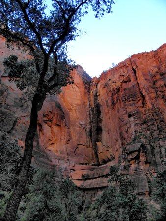 Zion Canyon Scenic Drive: Parete rocciosa